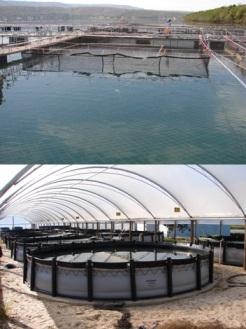 Produtos para piscicultura s o destaque da sansuy na for Piscicultura en tanques plasticos